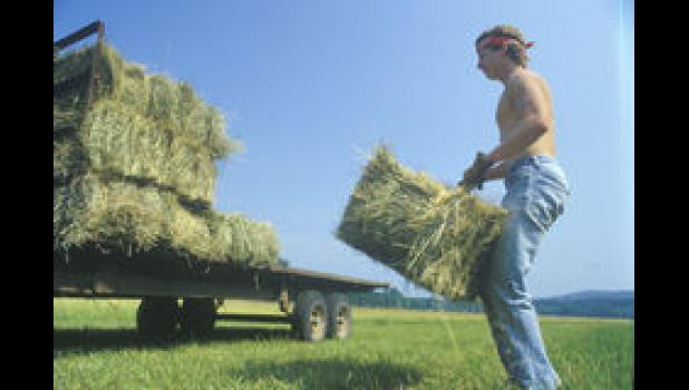 Agriculture workers are 20 times more likely than other workers to die from heat.
