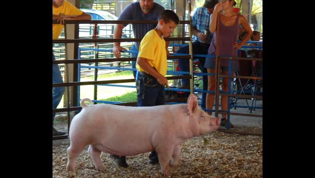Cass Kleeman of Braymer won a championship title with his Yorkshire gilt.