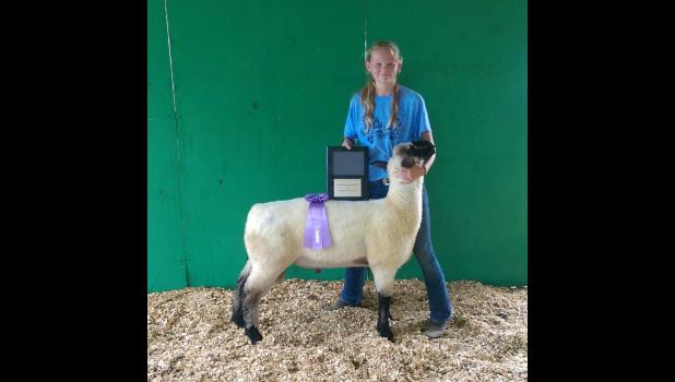 Ewe of Murphy Park wins title of Carroll County Fair Reserve Grand Champion Ewe 2016