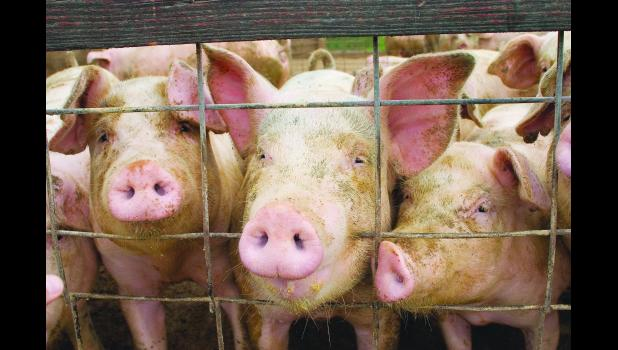 Hog prices remained stable in 2017.