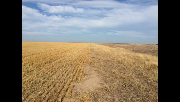 USDA encourages farmers to keep the stubble on their fields.