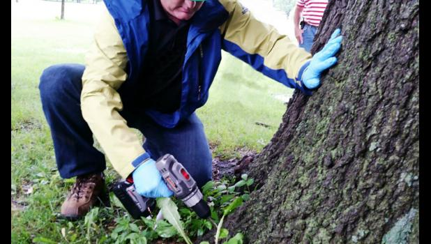A professional arborist can determine the best care for your trees.