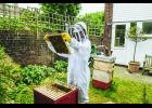 Greenhills Beekeepers Club to host an informational meeting on Pollinator Crops