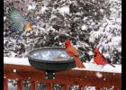 In winter our feathered friends especially need our help more than ever.