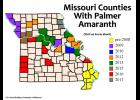Palmer amaranth, a species of pigweed, is now in at least 39 Missouri counties. Photo by Kevin Bradley, University of Missouri