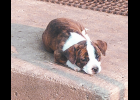 This puppy is looking for a home.